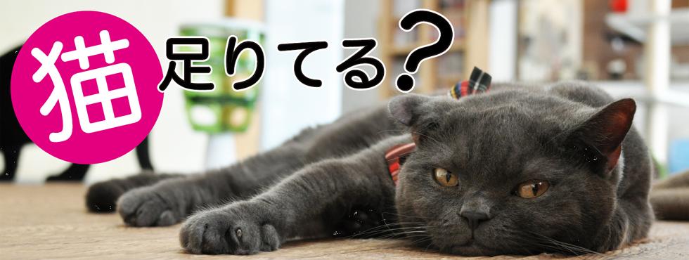 猫足りてる?