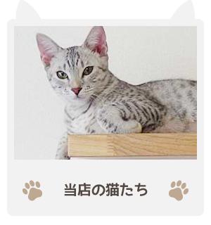 当店の猫たち